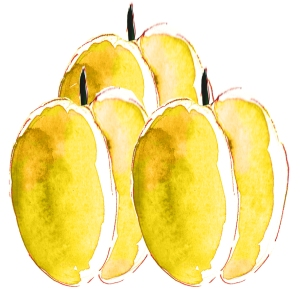 illustration prunne jaune à l'aquarelle
