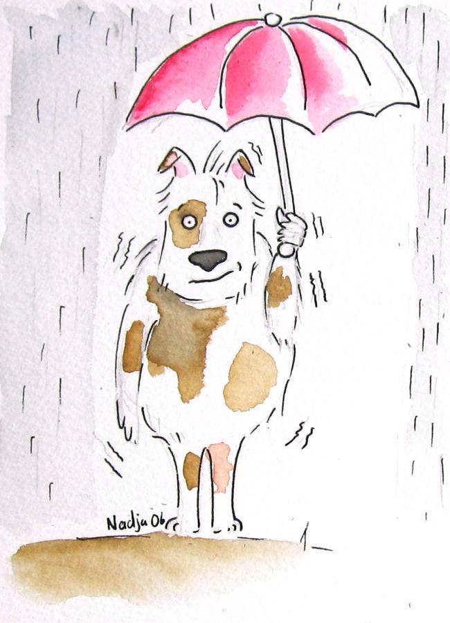 bergamotte sous la pluie