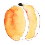 dessin abricot