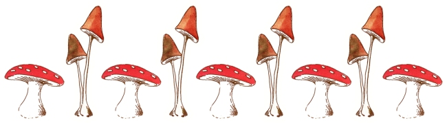 illustration champignon