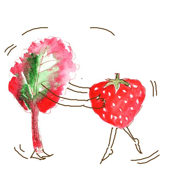 illustration fraise rhubarbe à l'aquarelle