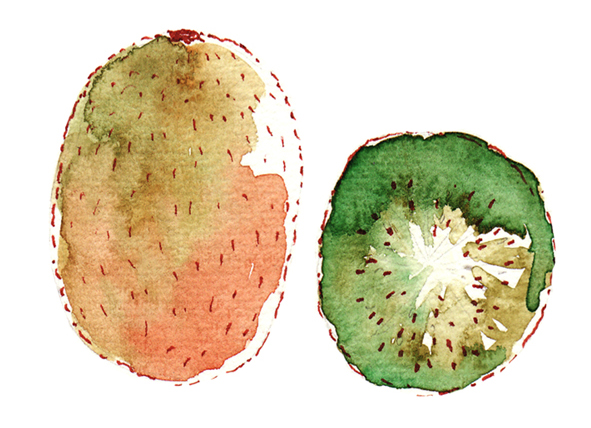 illustration kiwi à l'aquarelle
