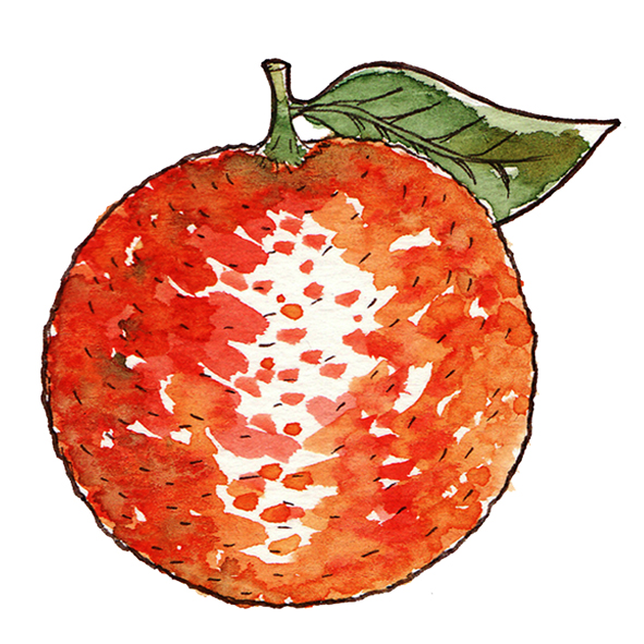 illustration orange à l'aquarelle