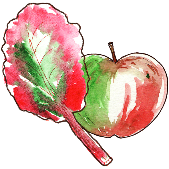 illustration pomme rhubarbe à l'aquarelle