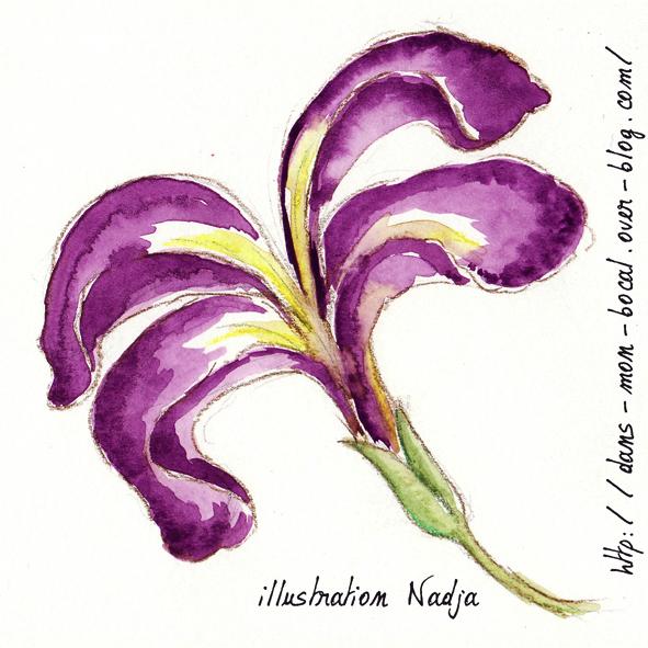 iris aquarelle