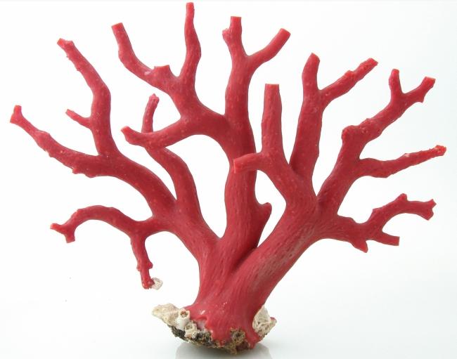 taillerie-corail-artisanat