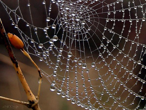 toile d'araigné