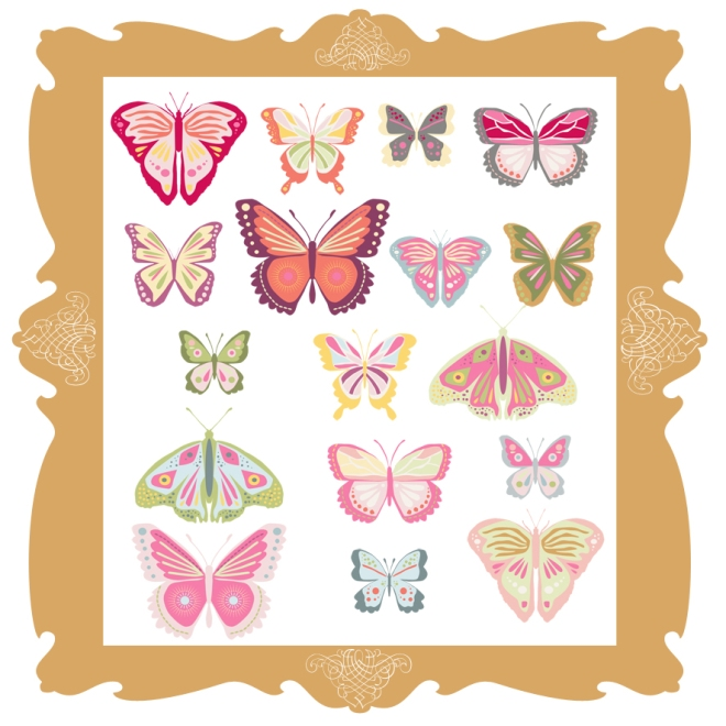 papillons collections