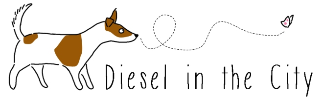 diesel le jack russell in the city