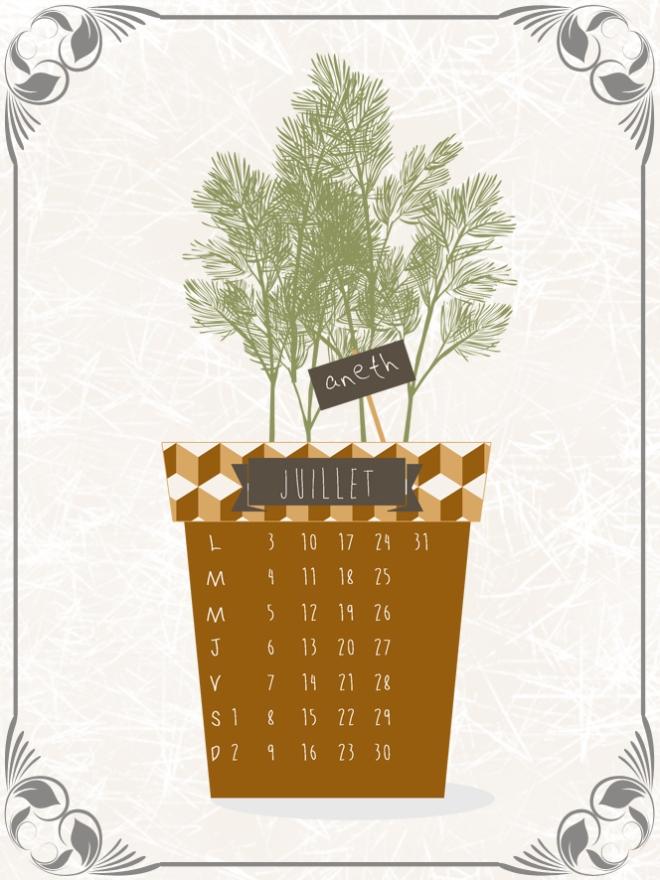 plantes-aromatique-en-pot-aneth