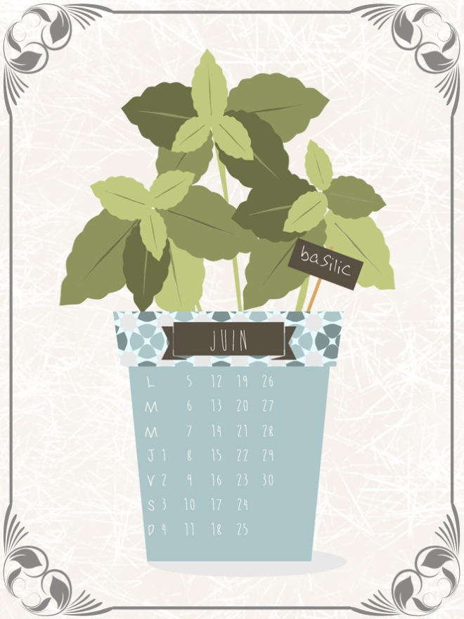 plantes-aromatique-en-pot-basilic