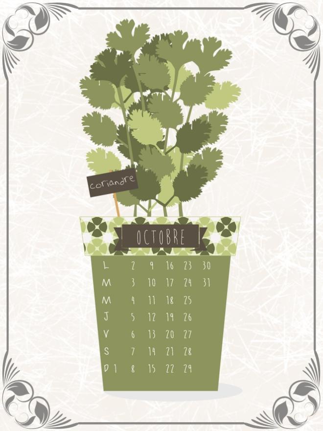 plantes-aromatique-en-pot-coriandre