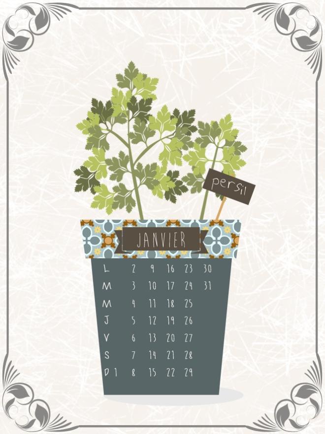 plantes-aromatique-en-pot-persil
