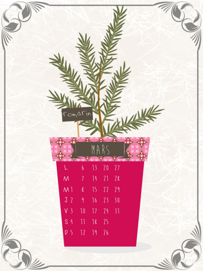 plantes-aromatique-en-pot-romarin