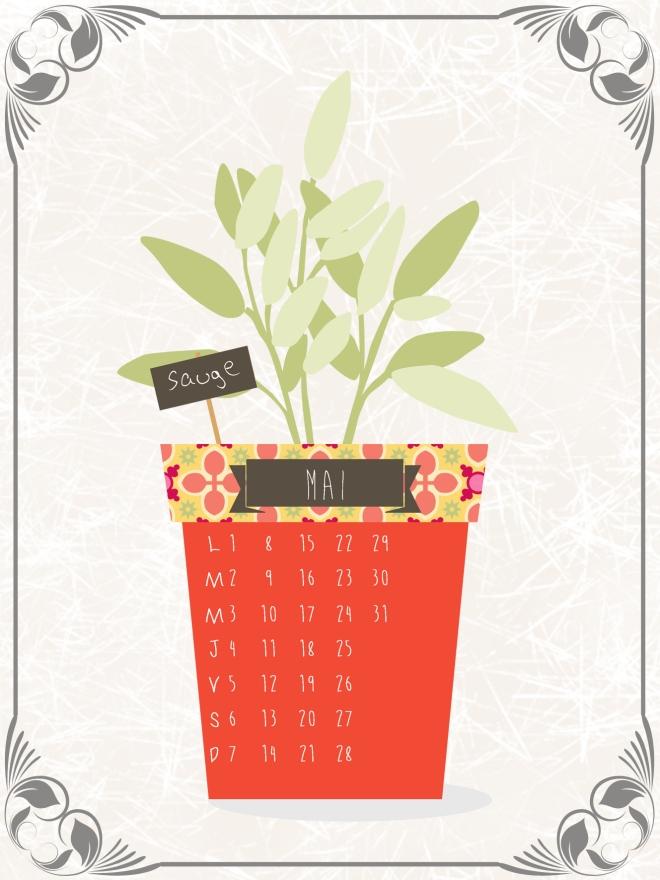 plantes-aromatique-en-pot-sauge