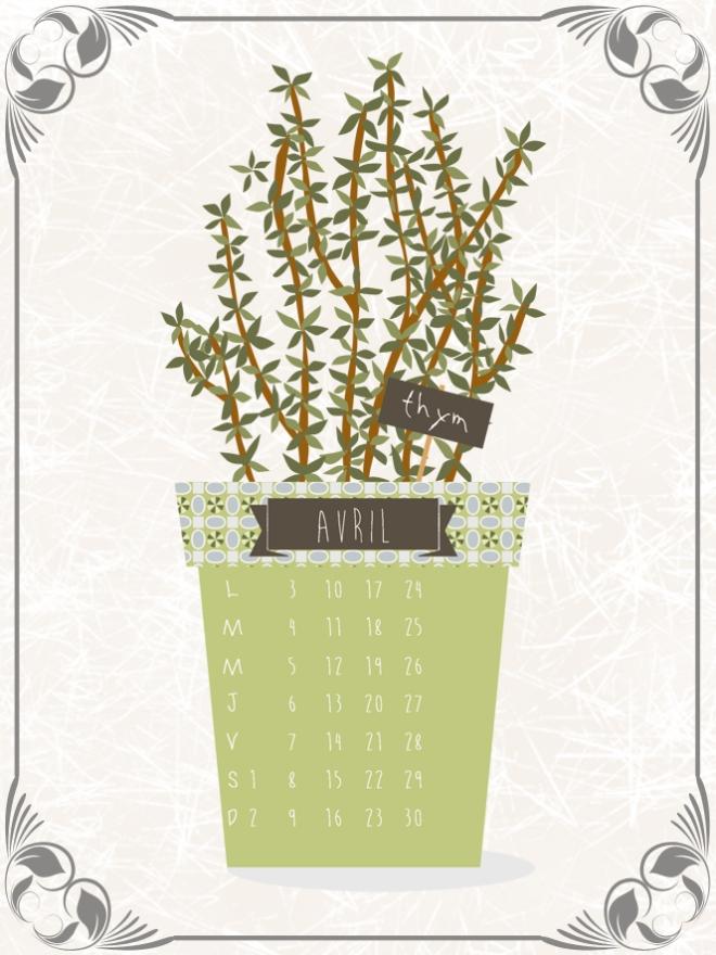 plantes-aromatique-en-pot-thym